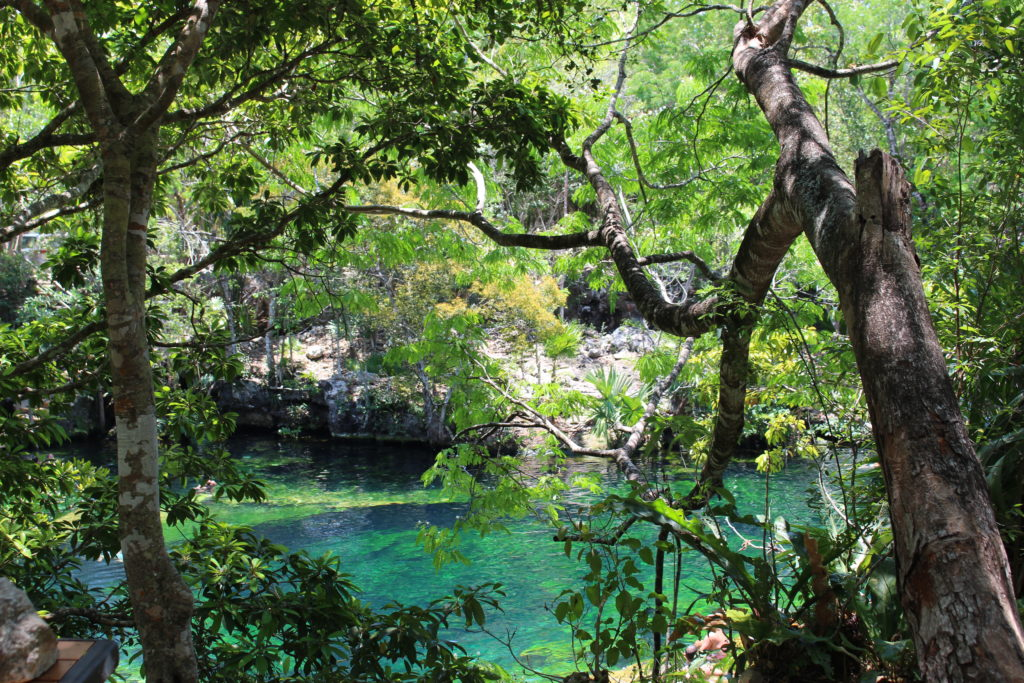 Jardin del Eden cenote peeking through the trees near Playa del Carmen, Mexico